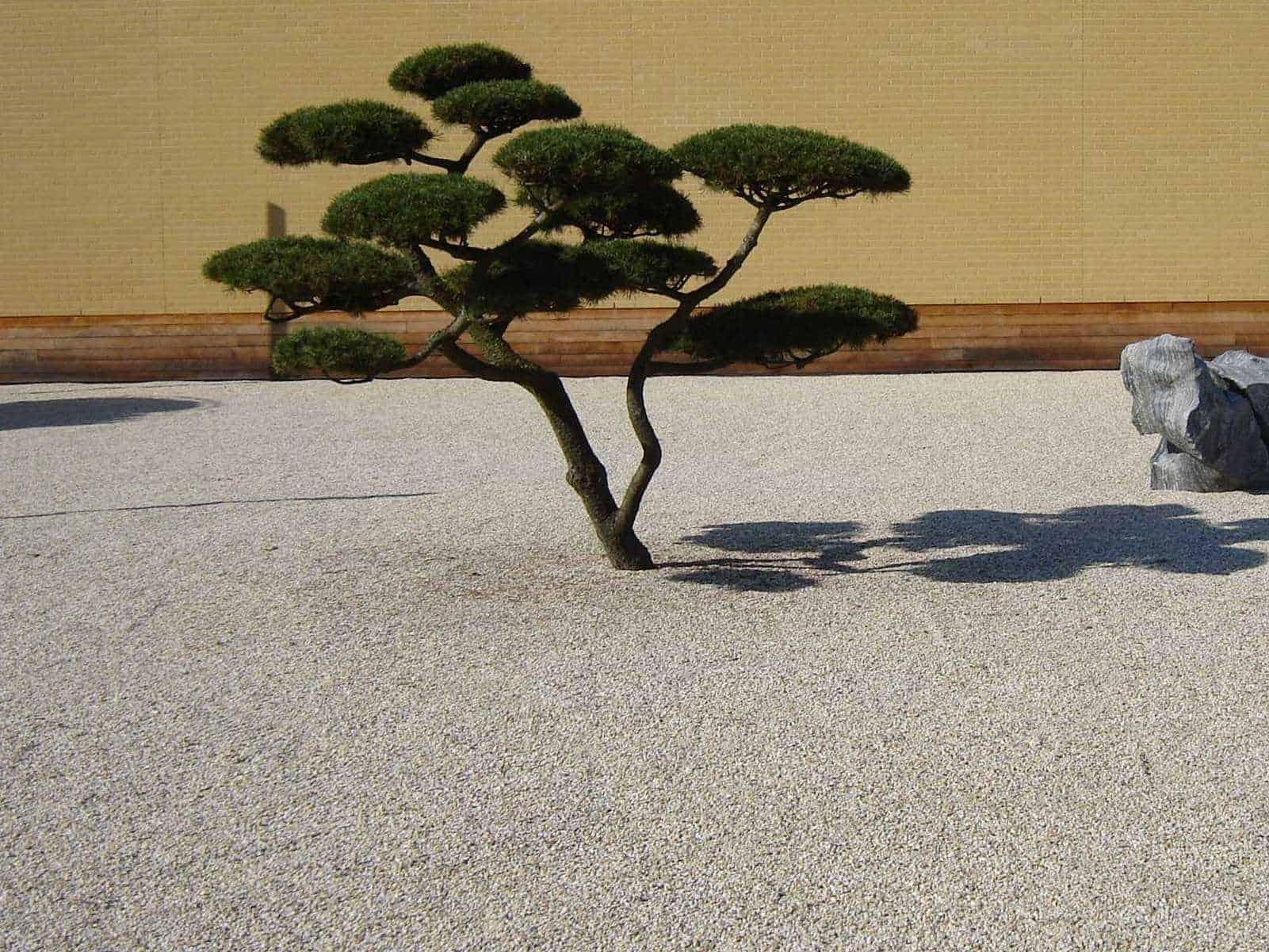 Zen Garten mit Bonsai